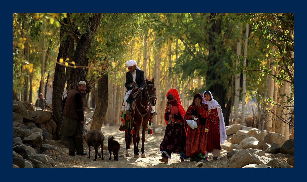 Basir Seerat's images (12)